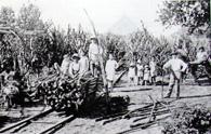 柳沢ジョアキンの父・喜四郎さんのサトウキビ畑での家族写真『二十周年写真帳』(安中安次郎、32頁)