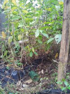 VERSTAが2年前に設置協力した苗床は今や〃無法地帯〃に