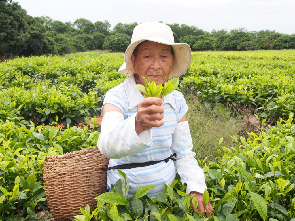 お茶歴83年の鑑識眼で、良い茶葉だけを選り分ける梅さん