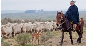 国境付近で羊放牧をするガウーショ(Foto: Claudio Fachel/Palacio Piratini)