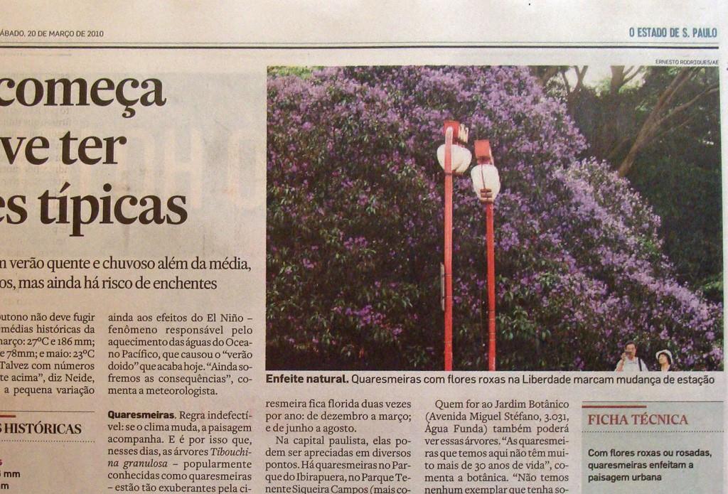 『クワレズマ』はクワレズメイラという南米原産のノボタン(野牡丹)科の花樹(かじゅ)の事 。(写真は2010年3月20日付けエスタード紙でも紹介されたリベルダーデ(東洋街)のクアレズマ)