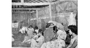 鶏舎の中の様子(パ紙1954年12月9日付記事の写真より)