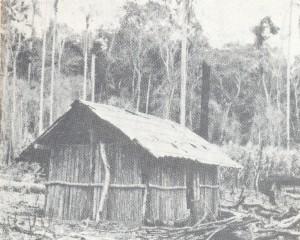 初期の移民が住んでいたパウミット小屋。椰子の割って板状にして作った(『棉作王 松原武雄』54頁)