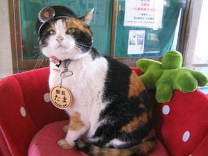 たま駅長(ウィキペディアより)