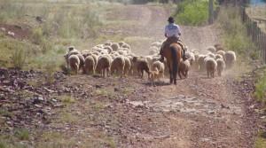 羊飼いのガウーショ(Foto: Duda Pinto/Fotos Publicas)