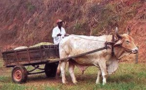 カロッサ(牛車)
