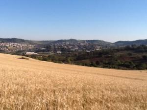 収穫前の小麦畑から見たアサイ市遠景