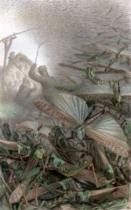 1887年にドイツライプツィヒで描かれた飛蝗の絵([Public domain], via Wikimedia Commons)