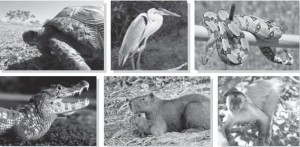 原始林の中の動物たち
