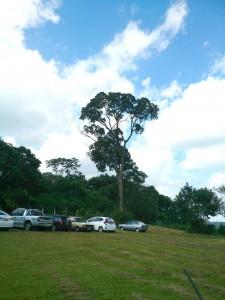 会館脇にたたずむ1本の大木。入植当時から残る唯一の原始林という
