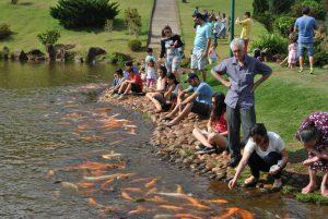 休日は鯉の餌やりで賑わう。 でもちょっと鯉が多すぎるような?