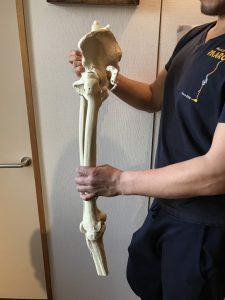 骨盤の動きの画像(かぶった状態)