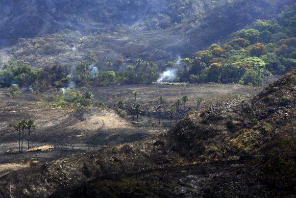 上空から見た火災が起きた公園(Valter Campanato/Agência Brasil)