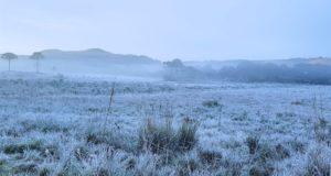 サンジョアキン市では野原一面に霜が降りた(Mycchel Hudsonn Legnaghi/São Joaquim Online)