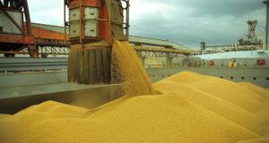 伯国の輸出のけん引役の大豆も、大半が積み込みまで行かずに止まっている(参考映像:Ivan Bueno/APPA)