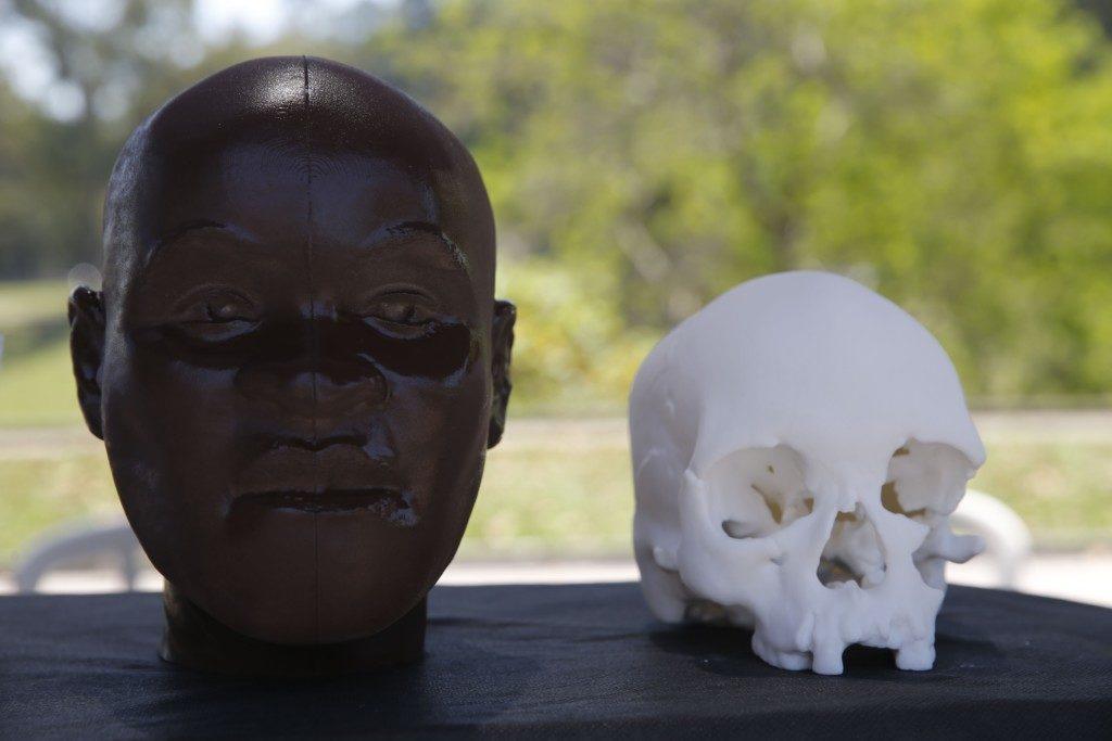 3Dで作られたルジアの頭蓋骨(Fernando Frazão/Agência Brasil)