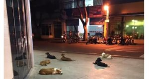 病院の前でルイス氏を待つ6匹の犬達(4日付G1サイトの記事の一部)