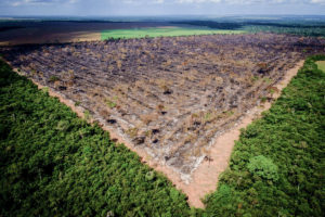 摘発を受けた法定アマゾン内の違法伐採地域(Foto: Mayke Toscano/Gcom-MT)