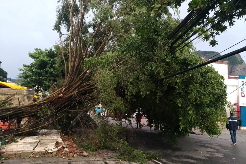 大雨と突風により市内120カ所以上で木が倒れ、交通遮断、停電を引き起こした(Fernando Frazao/Ag. Brasil)