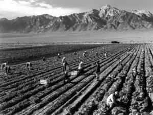 ウィリアムソン山を背景に農作業を行う収容者(アンセル・アダムズ撮影)