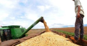 ブラジルのとうもろこし栽培のスケールは圧倒的だ(参考画像・EBC)