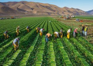 静岡県のカリフォルニア州農業視察(本人提供)