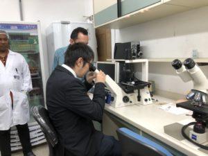 急性期の血液内の寄生虫を顕微鏡で観察する岡本さん(本人提供)