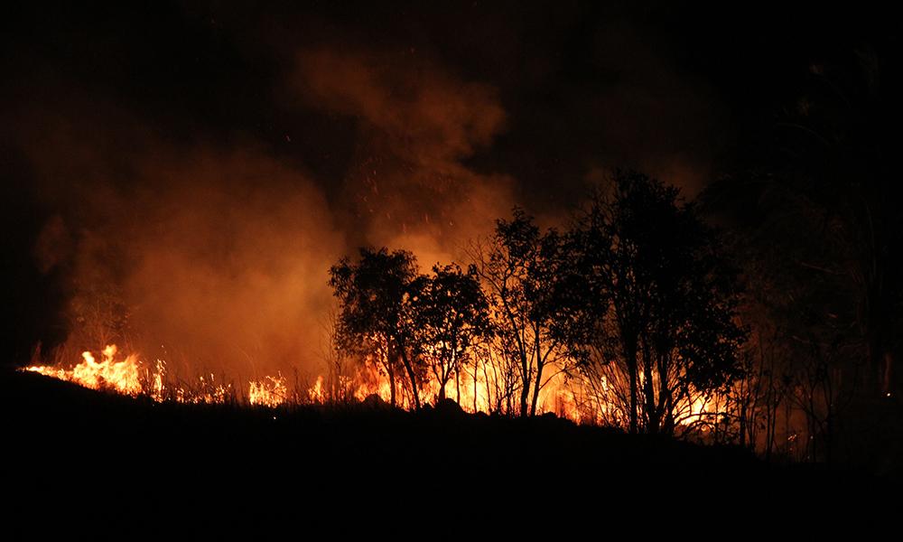 ブラジル》アマゾン森林火災で知事らが3国大使と会談