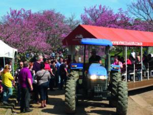 例年多くの人が訪れる「文協桜祭り」