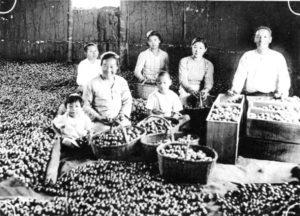 コーヒーの花が咲く中で着飾って記念撮影する日本人家族(『在伯同胞活動実況写真帳』1938年、竹下写真館 高知県古市町)