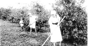 家族総出で耕地の草取りする様子(『在伯同胞活動実況写真帳』(1938年、竹下写真館 高知県古市町)