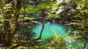 白神山地内にある青池(JH提供画像)