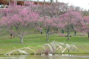 池には巨大ないけ花オブジェ作品