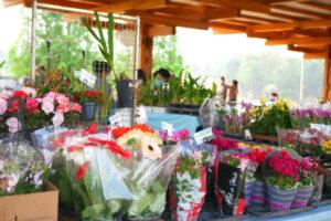 様々な花の鉢植えも販売された